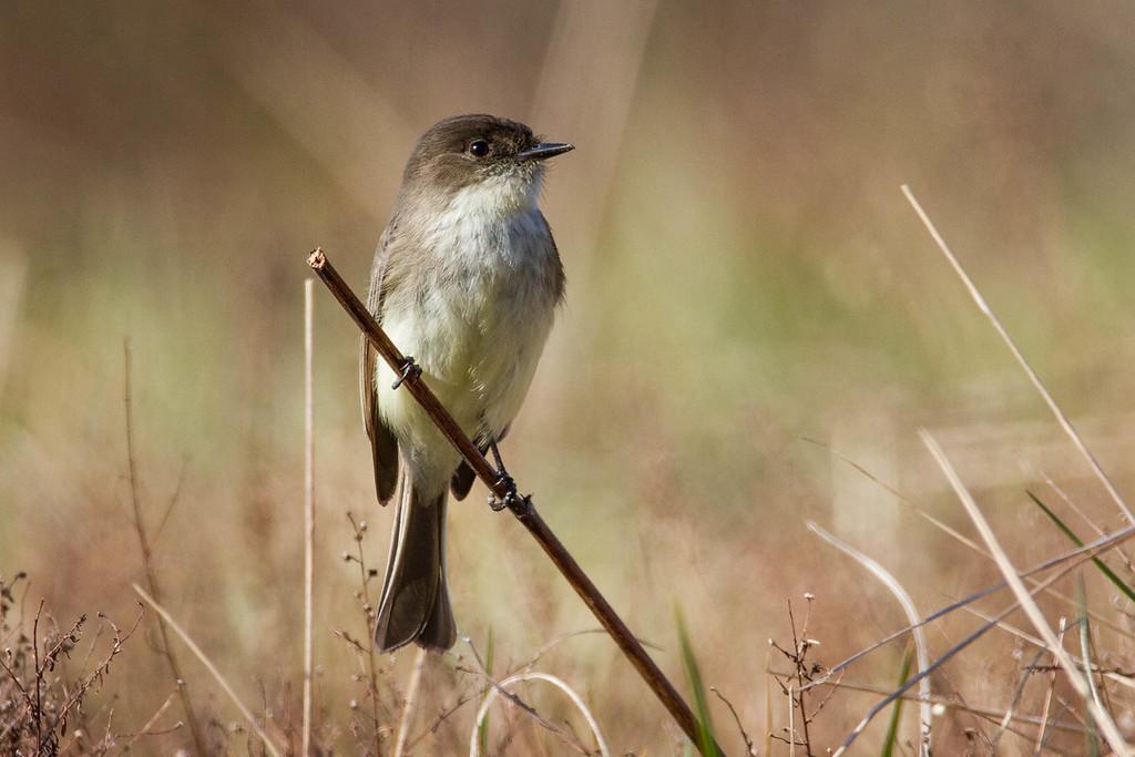 IMAGE: https://dougmoon.smugmug.com/Birds/i-5MgWXLb/0/XL/-%2002122016-6596-XL.jpg